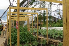 UK-Tomato supports-Eden-Project--IMG_2589