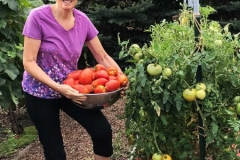 Tomato Harvest with Susan
