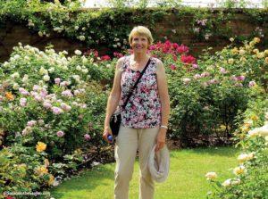 Sue - David Austin roses
