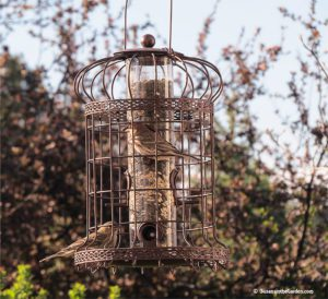 Edwardian bird feeder