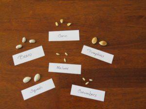 seed orientation