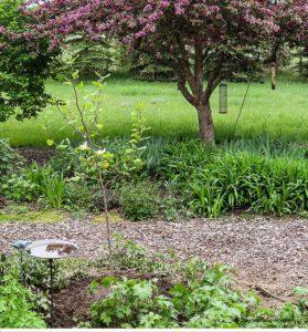 crabapple, magnolia butterflies