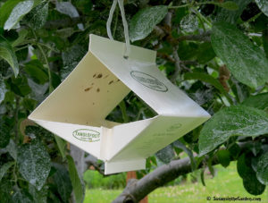 apple codling moth trap, growing apples organically