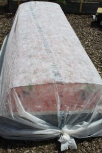 organic insect control, floating row cover