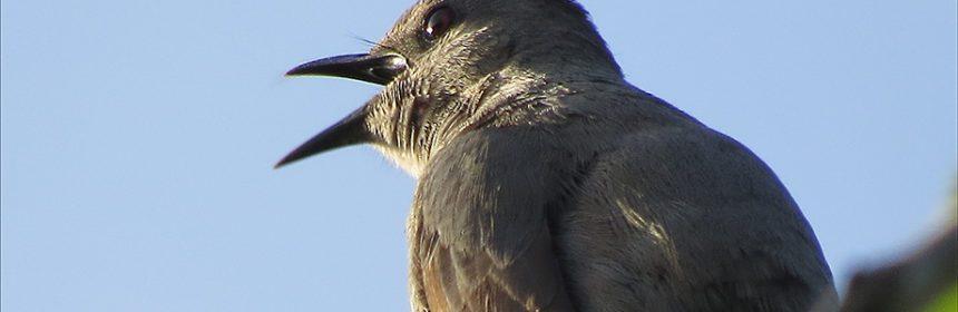 bird photography tips