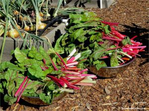 how to freeze Swiss chard