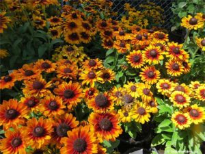 Friends of Manito plant sale