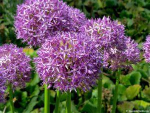 plant fall bulbs