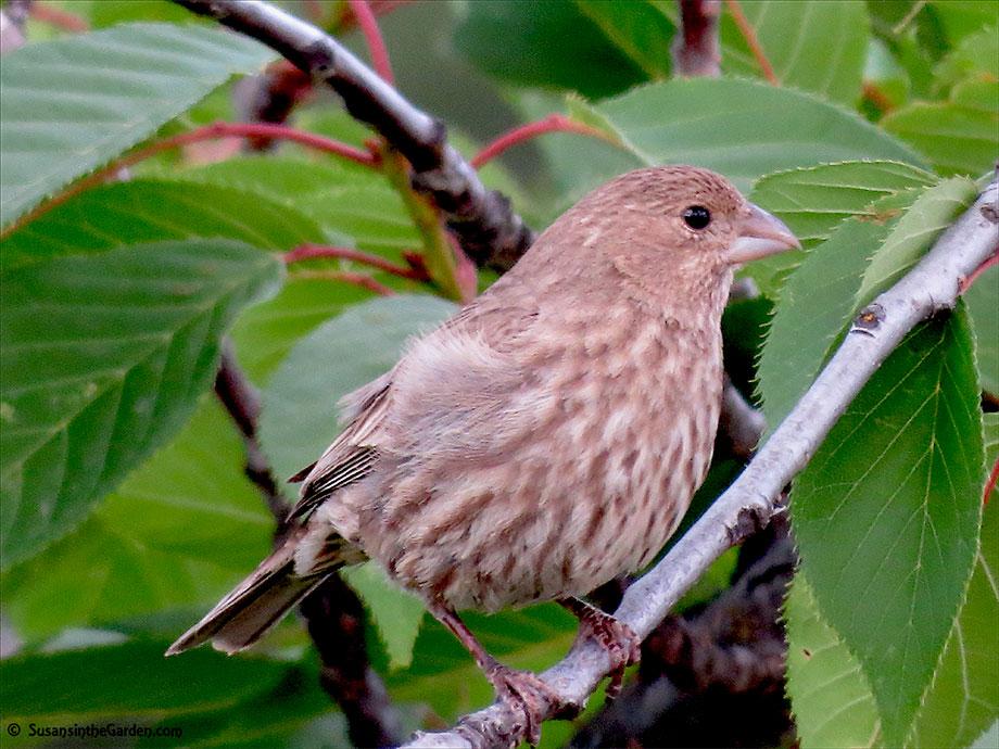 Alimentación de aves naturalmente en el invierno: Jardinería