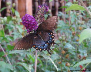 ga-butterflies-img_0216-editps