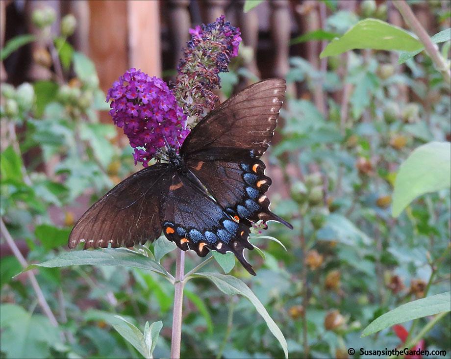 Ga Butterflies Img_0216 Editps
