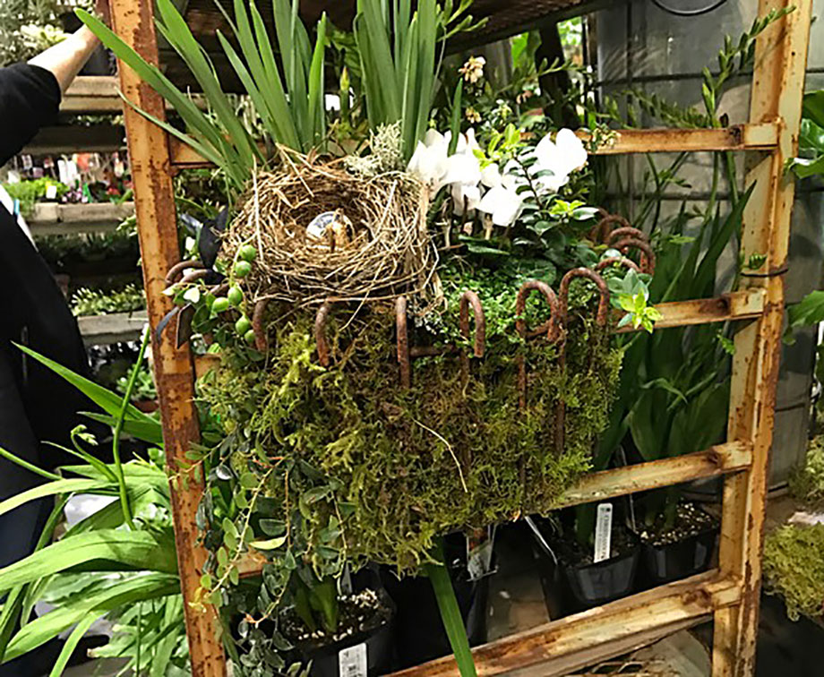 Northwest flower and garden show report 3 susan 39 s in - Northwest flower and garden show ...