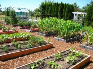 garden view, garden site selection