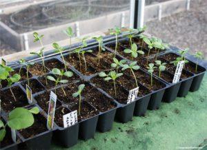 seed-starting