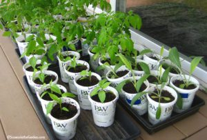 protecting seedlings
