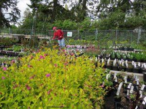 friends of manito plant sale