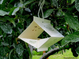 apple codling moth trap