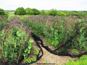 Crop Protection Covers
