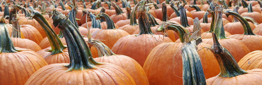 pumpkin-growing competition