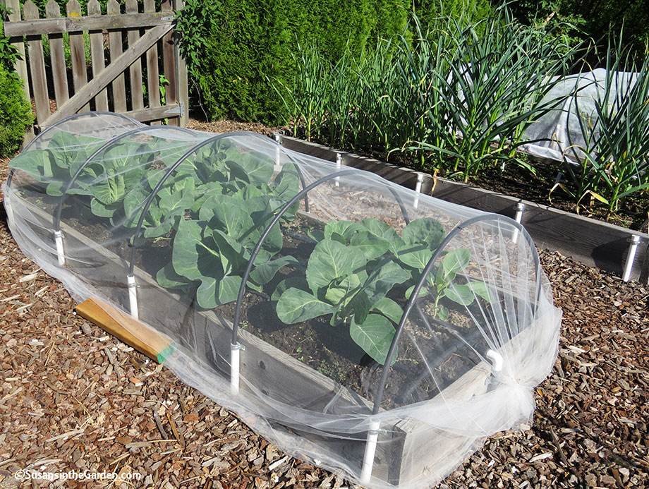 like floating row cover tulle netting is useful for organic pest control in the garden - Garden Row Covers