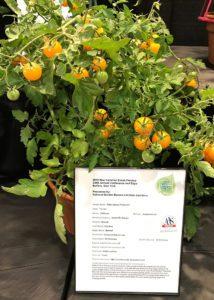 2018 vegetable varieties
